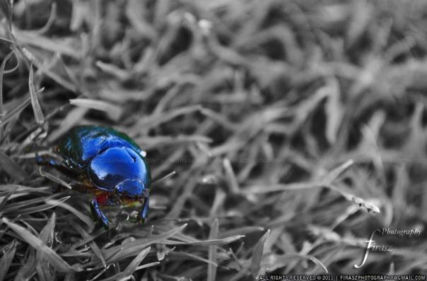 Beetle - the bug