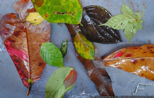 Wet fall leaves