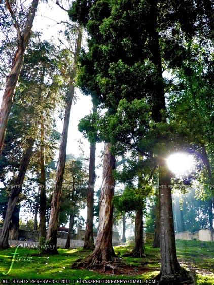 Sun among trees