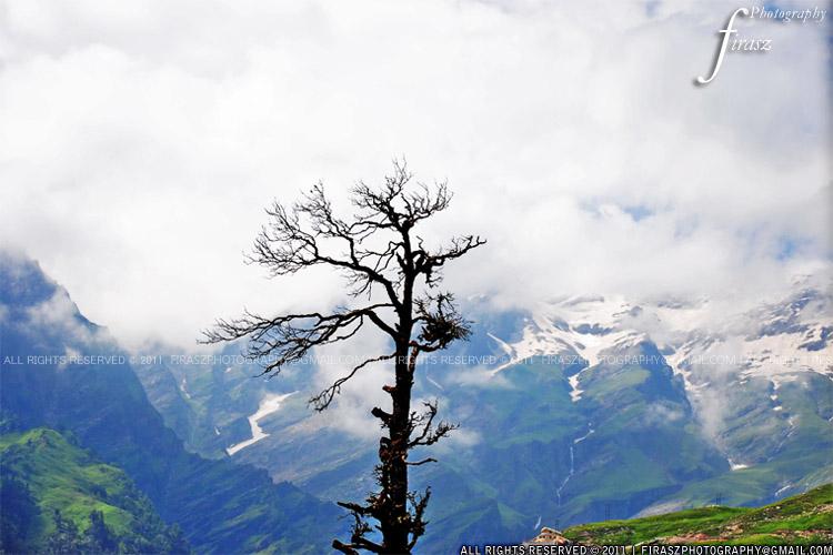 Skeleton of a tree