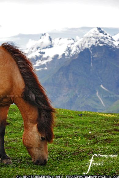 Silent horses near Himalayas
