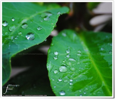 Drops on leaves