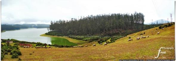 Ooty hills