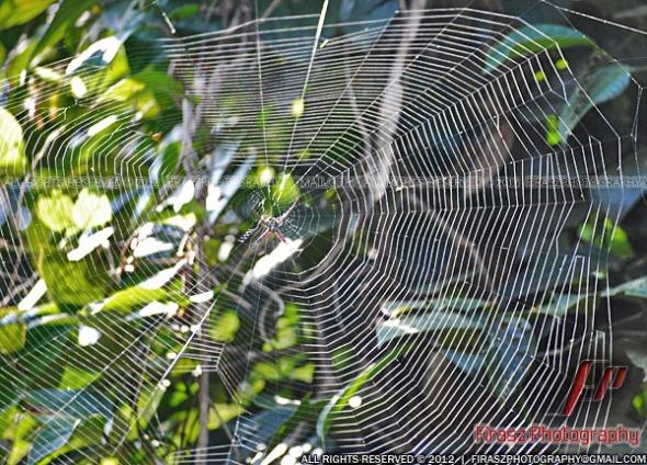 Spider domain