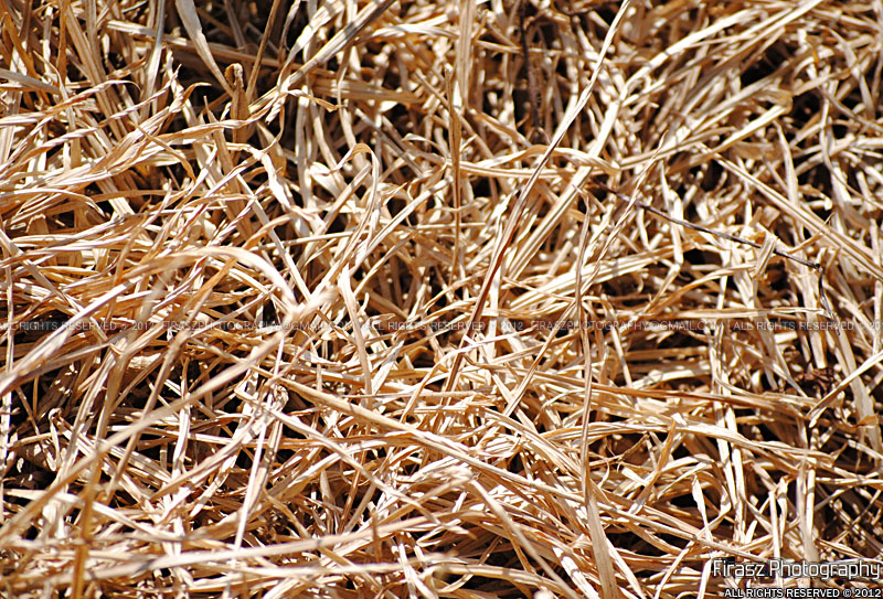 Pure hay
