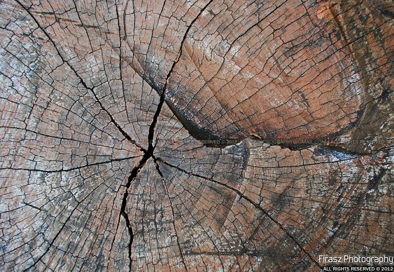 Wrinkles of pain and time on a wood