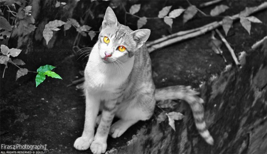 The Yellow-eyed