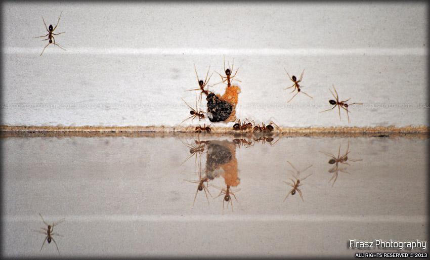 Ant-size Symmetry