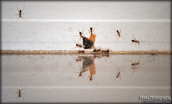 Ant-size Symmetry