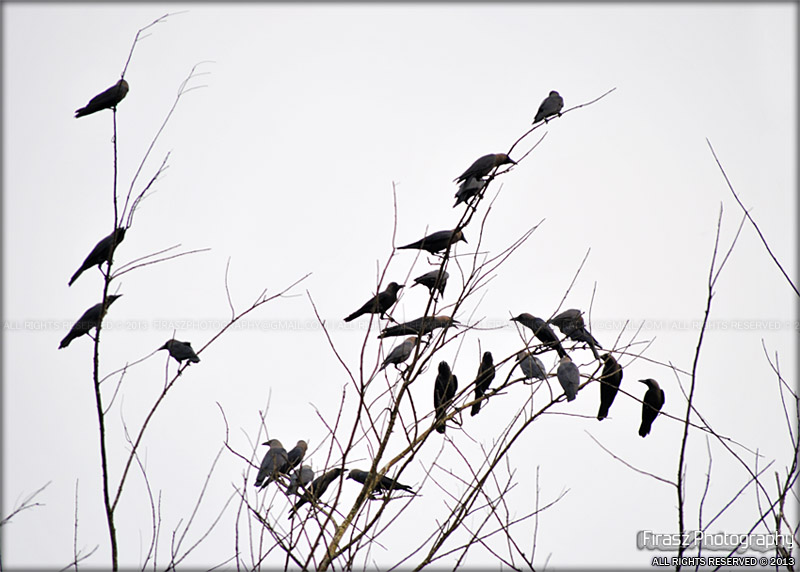 25 Waiting birds