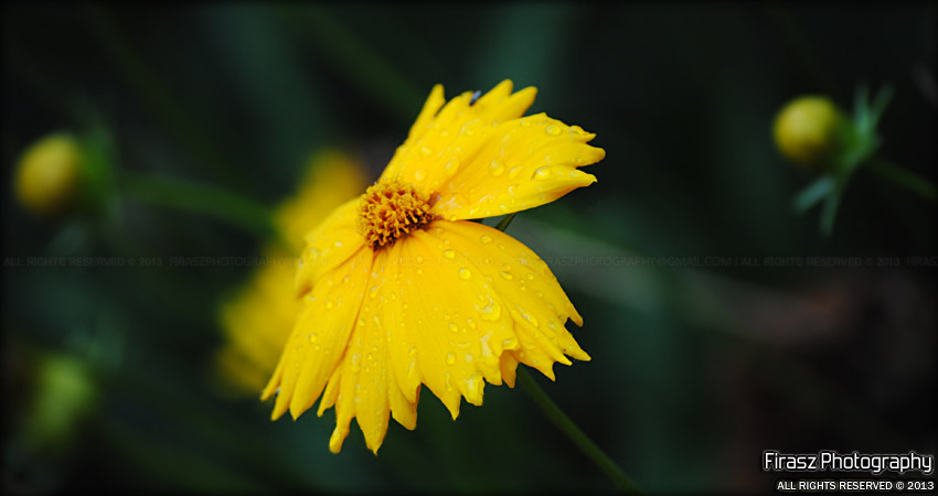 Yellowy Flower