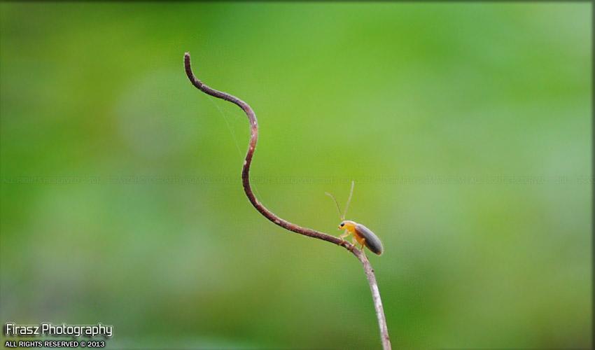 A bug's aim