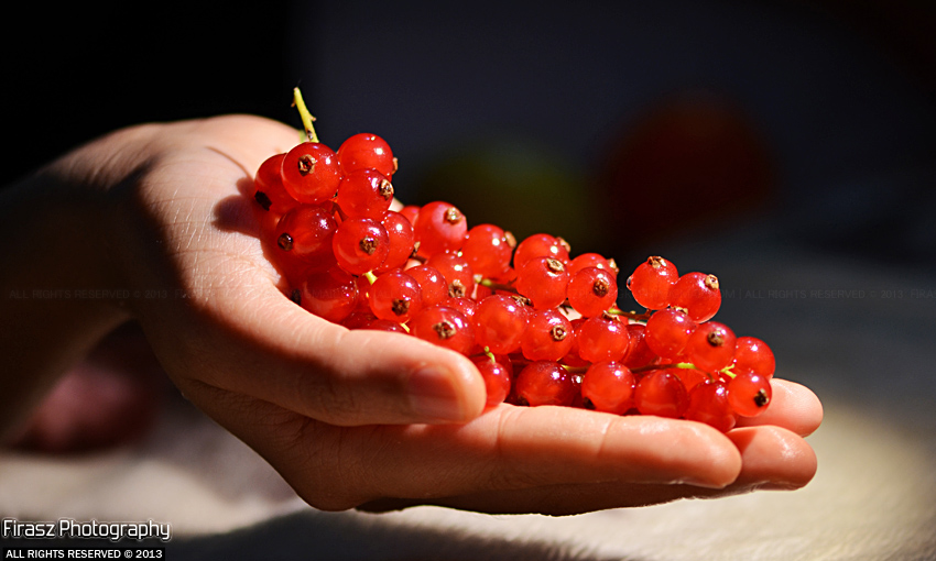 Redcurrants in Hand