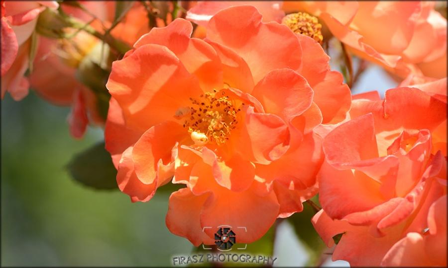 Enchanting Blooms5