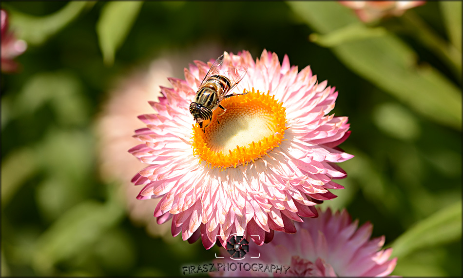 Enchanting Blooms4