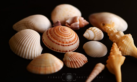 Handful of Seashells2