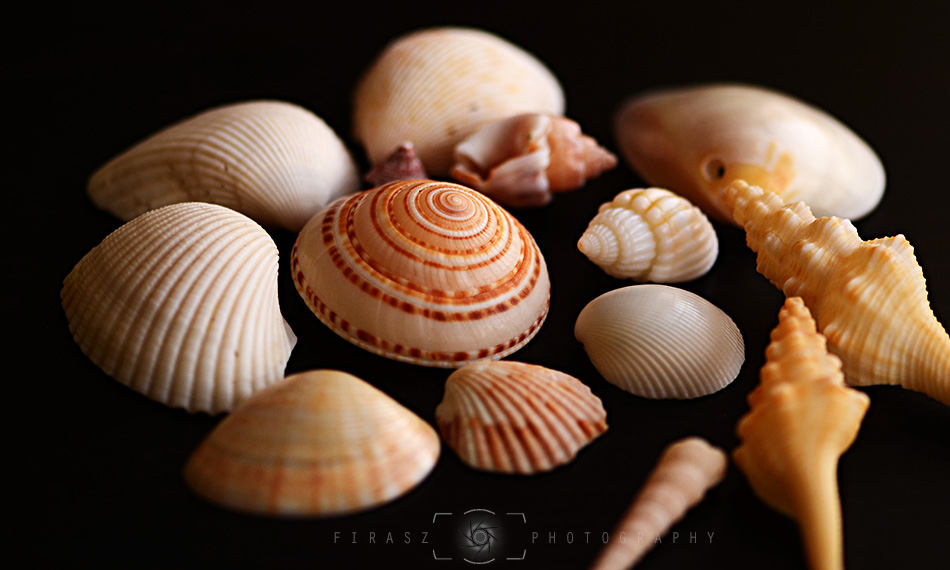Handful of Seashells2
