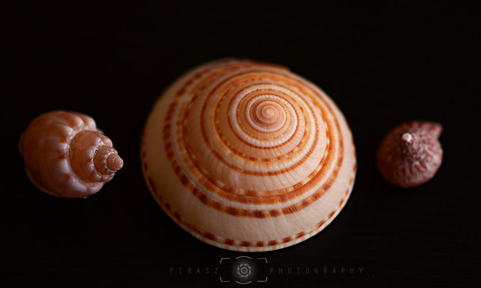 Handful of Seashells4