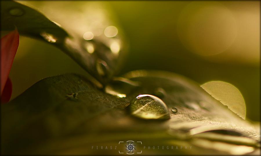 Dewdrops1
