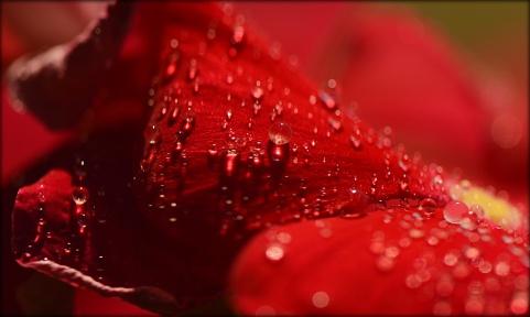 Dewdrops4