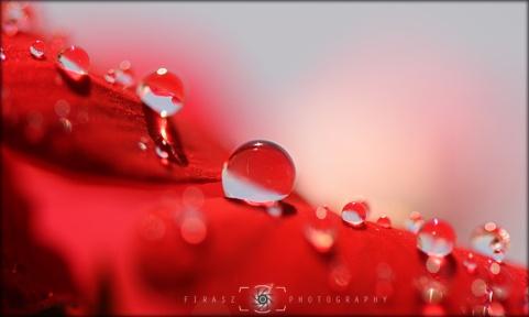 Dewdrops7