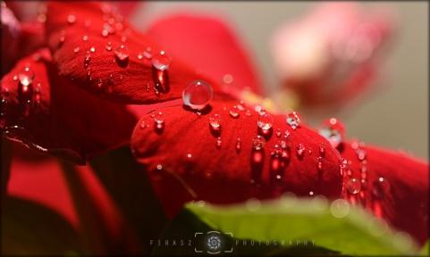 Dewdrops6