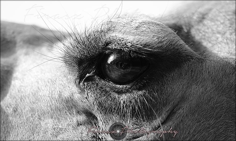 Oval Eyes2