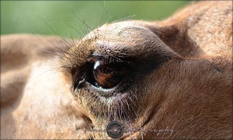 Oval Eyes3