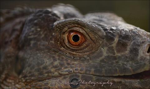 Oval Eyes4
