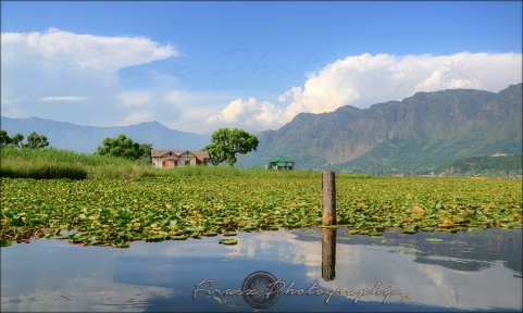 From Dal Lake1