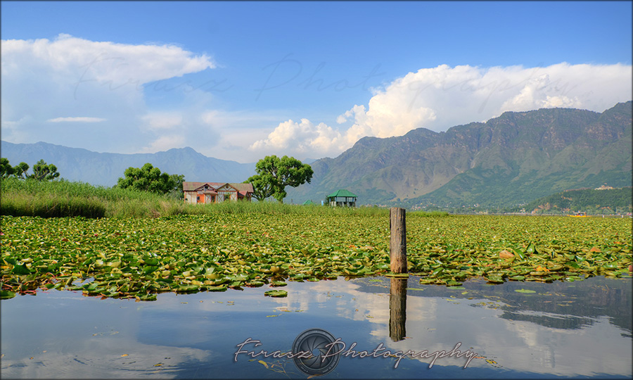 In Dal lake1