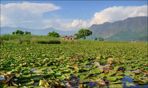 From Dal Lake2