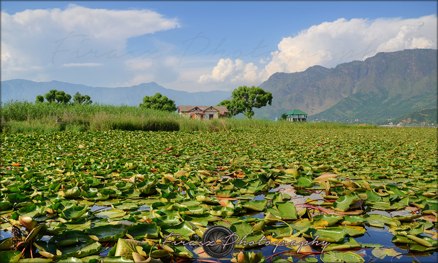 In Dal lake2