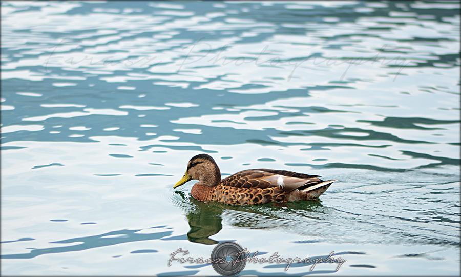 Quack a quack8