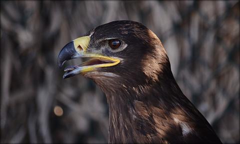 Portfolio of Hunter Birds10
