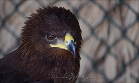Portfolio of Hunter Birds9