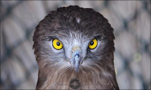 Portfolio of Hunter Birds8
