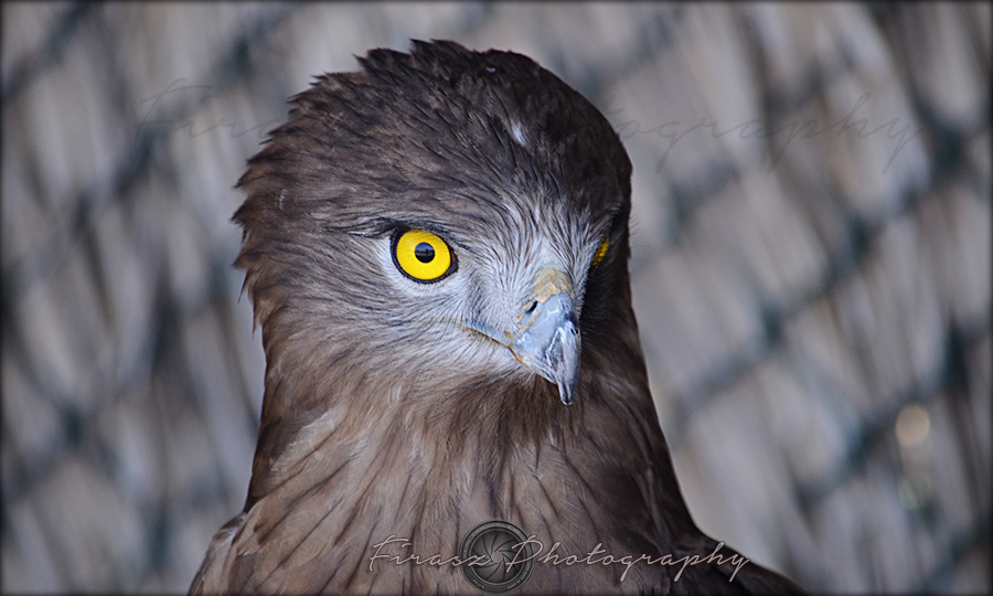 Portfolio of Hunter Birds3