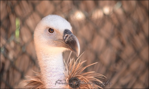 Portfolio of Hunter Birds11