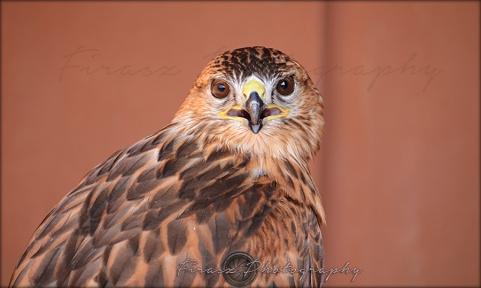 Portfolio of Hunter Birds5