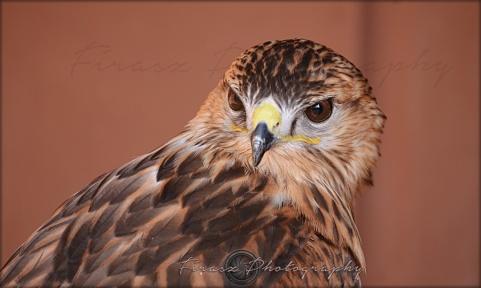 Portfolio of Hunter Birds4