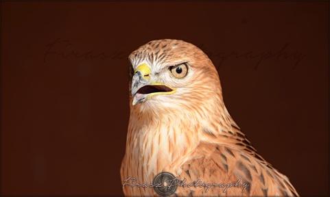 Portfolio of Hunter Birds2