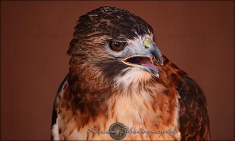 Portfolio of Hunter Birds1