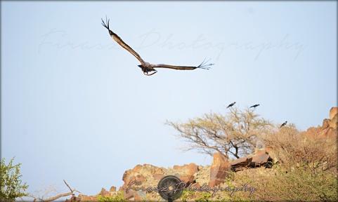 Portfolio of Hunter Birds12