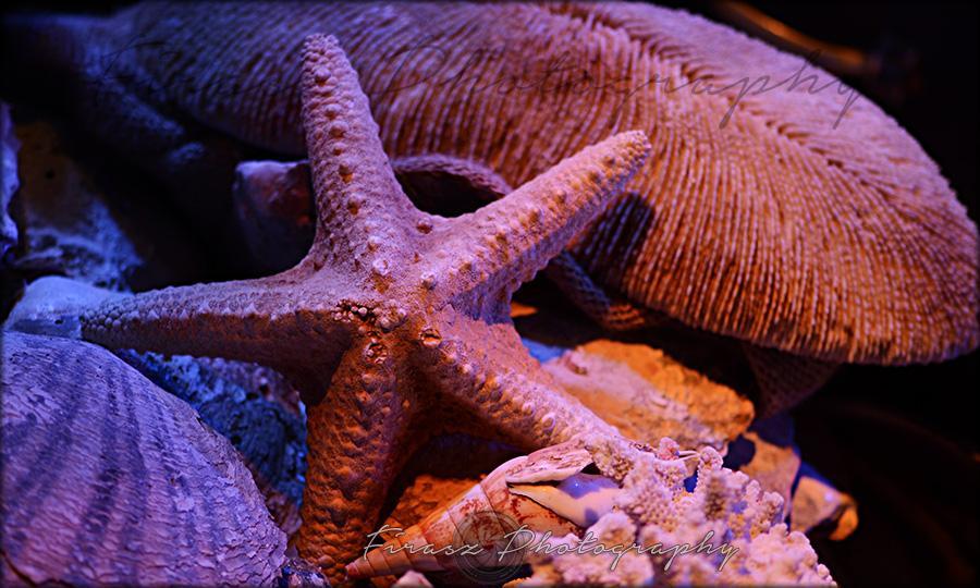 Sea Treasures1