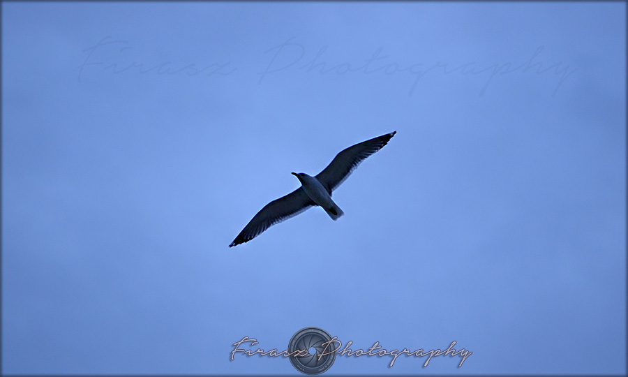 Wings Wide2