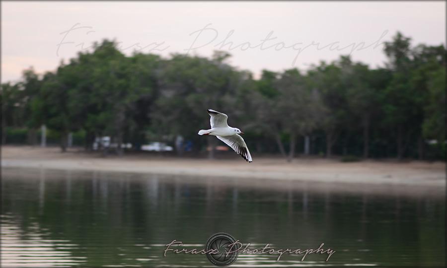 Wings Wide1