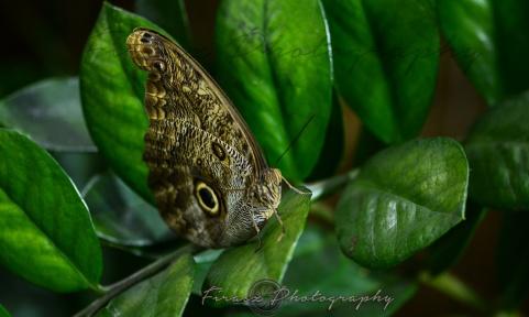 Butterfly Effect1
