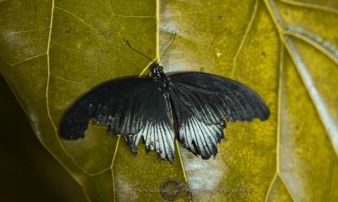 Butterfly Effect2