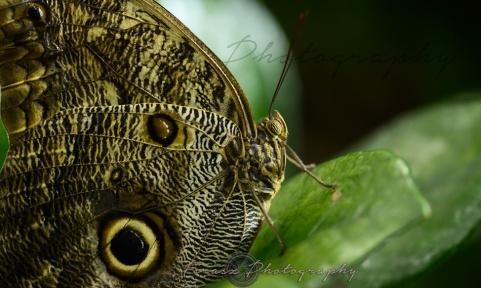Butterfly Effect4